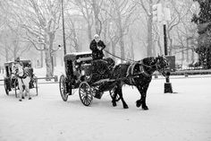 Carriage ride in the snow