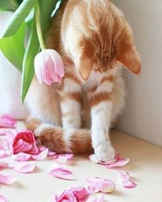 kitty cats - pics of cats - cat health - cat at work - funny cats picture Cute Cats And Kittens, I Love Cats, Crazy Cats, Kittens Cutest, Baby Animals, Cute Animals, Animal Gato, Gatos Cats, Red Cat