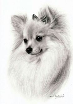 Pencil Drawings Of Animals, Animal Sketches, Art Drawings Sketches, Dog Drawing Tutorial, Chihuahua Art, Nature Sketch, Dog Portraits, Animal Paintings, Dog Art