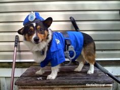 The Daily Corgi: #Corgi Cops n' Robbers: A Dogue's Gallery!