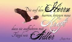 Jesaja 40,31: Die auf den Herrn harren, kriegen neue Kraft, dass sie auffahren mit Flügel wie Adler Das Bild kann man hier runterladen: Jes 40,31.jpg