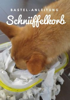 A Schnüffelkorb for the dog easily from fabric remnants produce Hund - Hund welpen - Rottweiler hund Food Dog, Beagle, Yorkie, Baby Care Tips, Fabric Remnants, Animal House, Training Your Dog, Unisex Baby, Dog Care