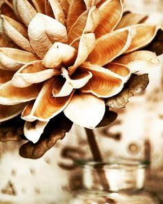 #artjournal #artcollective #instaart #allthingsbotanical #bloomsday #flowersofinstagram #flowersoftheday #flowerlover #florallife #blooooms #flowerstagramer #flowersoftheworld #awesomeearth #natureaddict #nature #naturephoto #naturegeography #naturelover #welivetoexplore #botanicalpickmeup #plantlove #plantstagram #artfollow He Day, Pick Me Up, Nature Photos, Insta Art, Awesome, Floral, Flowers, Plants, Plant