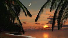 Palm Ocean Sunset Waves Trees Tropical Beach