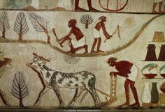 Egyptraveluxe Tours -Egypt day tours and Egypt Travel: Egypt Nile -Agriculture &irrigation system