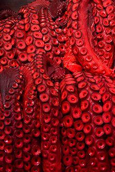 #EgonvanEngelen #octopus #red