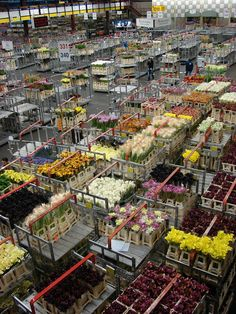 Aalsmeer Flower Auction (Bloemenveiling Aalsmeer) is a flower auction, located in Aalsmeer, the Netherlands.  It is the largest flower auction in the world.