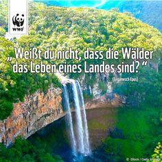 Der Amazonas muss überleben! www.wwf.de/viva-amazonia  #VivaAmazonia