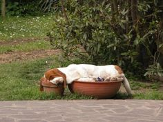 Something a Basset Hound would do......