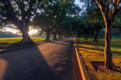 Parque Ibirapuera, São Paulo, Brazil