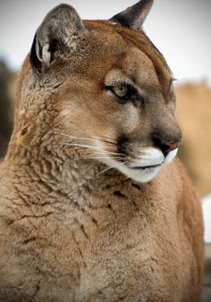 eye-of-the-cat:  (Scott Denny)