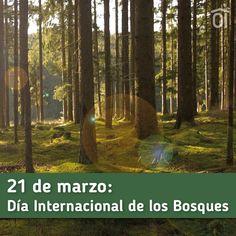 Día Internacional de los #Bosques