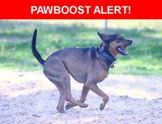 Please spread the word! Penny was last seen in Orlando, FL 32809.    Nearest Address: Near Sand Lake Rd & Sunshine State Pkwy