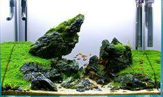 2ft Seiryu Scape - Pride Rock