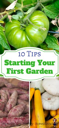 10 Tips for Starting Your First Garden. Get gardening today!