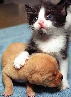 Thiz iz a pic of a cute kitten nd puppy!!!