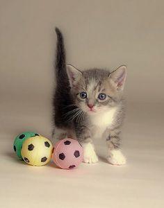 cute kitten has three little balls