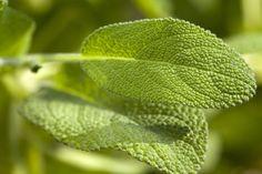 12 Fresh Herbs to Grow This Spring - Yahoo Shine