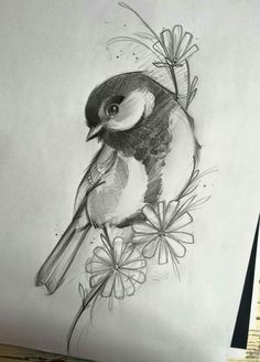 Art Drawings Sketches Simple, Animal Sketches, Bird Drawings, Pencil Art Drawings, Animal Drawings, Bird Pencil Drawing, Color Pencil Art, Button Tree Art, Drawings Pinterest