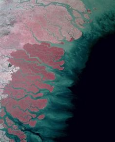 Aerial Photo of Sundarbans Mangrove Forest