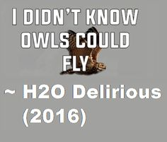 Yes they can Delirious. If Hoodini can fly then owls can definitely fly.