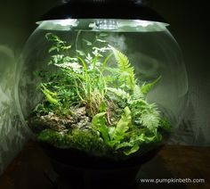 My BiOrbAir terrarium as pictured on the 1st January 2016.