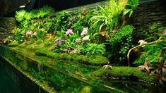 The results of Taiwanese aquascaping contest 2010 - Aquascaping World