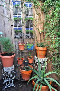 Vertical Gardener: Turn a Shoe Organizer Into a Vertical Planter Vertical Planter, Planter Pots, Over Door Shoe Rack, Toy Rooms, Shoe Organizer, Urban Gardening, Organization, Plants, Organisation