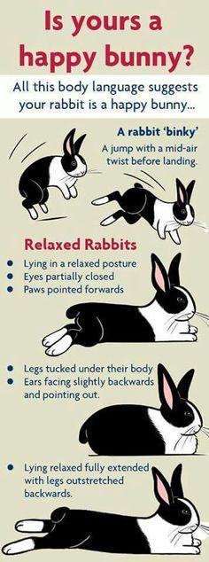 Bunny body language