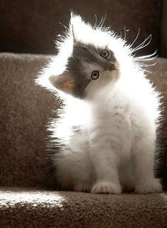 Glowing kitten!