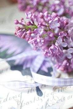 Paris Gardens and David Austin Roses from Garden Photo World: Syringa: New Lilac Collection! Lilac Color, Purple Lilac, Shades Of Purple, Purple Flowers, Deep Purple, Lavender Cottage, Lavender Blue, Mauve, Paris Garden