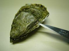 Conçue pour vous faciliter la vie !! Ce procédé magique vous permet d'ouvrir les huîtres en toute simplicité... #huîtresmeûlées #parafinées #easytoopen