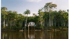 Voici ma maison, elle est construite sur pilotis au bord du fleuve Amazone.