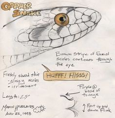 Study the shapes of snake facial scales to help you identify and draw what you see. Snake bodies are covered with overlapping scales (see previous post for tricks on drawing body scales). The scales of the head of many snakes … Continue reading → Snake Sketch, Snake Drawing, Snake Art, Drawing Techniques, Drawing Tips, Drawing Lessons, Drawing Ideas, Animal Drawings, Art Drawings