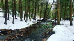 Hickory Run State Park - Shades of Death trail #explorepa