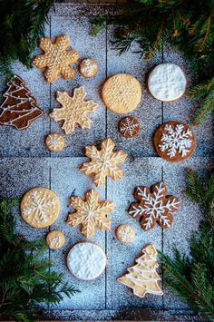 Christmas Gingerbread and Sugar Cookies