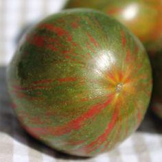 Tomate Kozula 132 (Samen)