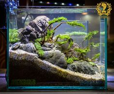 Diy Fish Tank River Rock Decor Aquascaping Ideas Aquarium on Aquatic Eden Aquasc Tropical Fish Aquarium, Tropical Fish Tanks, Aquarium Fish Tank, Saltwater Aquarium, Aquascaping, Vivarium, Paludarium, Aquarium Landscape, Nature Aquarium
