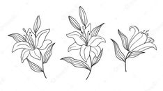 Linear, Aster Flower, Valley Flowers, Floral Logo, Frame Template, Lily Of The Valley, Botanical Illustration, Moose Art, How To Draw Hands