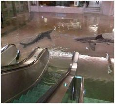 The collapse of a shark tank at The Scientific Center in Kuwait. It's probably the only time in your life you will see something like this. HOLY POOP!!