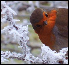 Who's a pretty Birdie? Me, ME!!