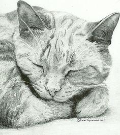 Cat - pencil drawing