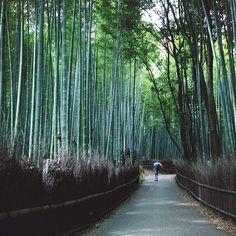 Kitasaga Bamboo Grove, Sagano, Kyoto, Japan 竹林の小径 / 京都府 京都市 嵯峨野