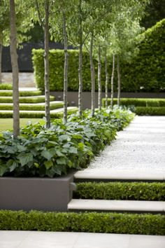 Peter Fudge creates gardens that connect in deep and meaningful ways. Peter has been designing beautiful gardens since Every garden design has… Modern Landscaping, Outdoor Landscaping, Hedges Landscaping, Formal Gardens, Outdoor Gardens, Back Gardens, Small Gardens, Hampton Garden, Contemporary Garden