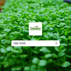 """Dahons MicroGreens (@dahonsmicrogreens) added a photo to their Instagram account: """"🎉"""" Instagram Accounts, Accounting, Herbs, Ads, Herb, Medicinal Plants"""