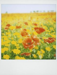 size: Photographic Print: Polaroid of Field of Poppies and Yellow Wild Flowers, Near Fez, Morocco, North Africa, Africa by Lee Frost : Ways Of Seeing, North Africa, Botanical Art, Daffodils, Find Art, Framed Artwork, Wild Flowers, Frost, Poppies