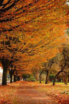 Sidewalk in autumn | Flickr - Fotosharing!