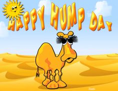 Happy Hump Day Quote With Camel wednesday hump day humpday hump day camel…You can find Hump day quotes and more on our website.Happy Hump Day Quote With Camel wednesday hum. Wednesday Greetings, Wednesday Hump Day, Happy Wednesday Quotes, Wednesday Humor, Its Friday Quotes, Happy Saturday, Happy Friday, Sunday, Hump Day Quotes
