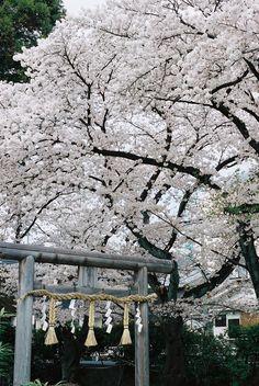 Hiragi-no-Miya, Japan