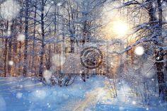 """Fotobehang """", snow, wood - sneeuw in het bos"""" ✓ Makkelijke montage ✓ 365 dagen voor retourneren ✓ Bekijk andere designs van deze collectie!"""